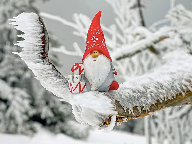 A festive gnome ornament sits on an icy tree branch